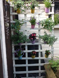 My vertical garden