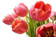 """#Med ét greb hun med hver hånd om to smukke blomster tæt ved og råbte til døden """"Jeg river alle dine blomster af, for jeg er i fortvivelse""""#"""
