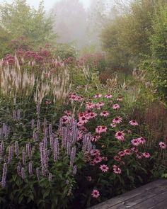 Coneflowers, veronica in een overblijvend border garden design. Roze, paars en groen ... - Annelies Schutten Tuin ideeën