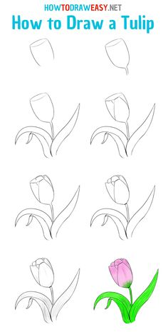 Outline Drawings, Easy Drawings, Flower Step By Step, Draw Two, Flower Texture, Learn To Draw, Sketching, Tulips, Doodles