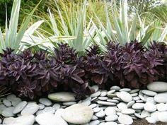 Tropical Landscaping, Landscaping Plants, Tropical Garden, Garden Plants, Landscaping Ideas, Patio Ideas, Safari, Drought Tolerant Landscape, Winter Plants