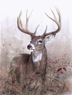 Deer in art many prints here! Whitetailed Deer and other wildlife art by Larry K. Wildlife Paintings, Wildlife Art, Animal Paintings, Animal Drawings, Art Drawings, Deer Paintings, Horse Drawings, Wild Life, Deer Photos