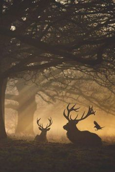 """elvenlake: """"Dawn Symmetry """" Loved by Mrs. Beautiful Creatures, Animals Beautiful, Cute Animals, Nature Pictures, Animal Pictures, Deer Pictures, Wildlife Photography, Animal Photography, Natur Tattoos"""