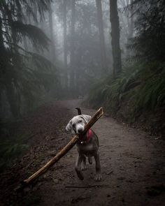 Murphy is all about finding huge sticks!  And as for the snow storm, I'm safe at home with him. I left work at 1pm and felt kinda silly but so glad I did and got groceries.