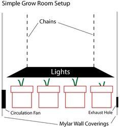 Growing Marijuana Indoors Guide and Tips | Grow Room