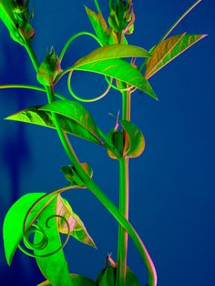 "TORKIL GUDNASON - ""Hothouse 677"" #color #art #photography #flower #floral #flora"