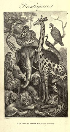 Natural history of animals. Illustrated by short stories and anecdotes  London :Harvey and Darton,1842.  Biodiversitylibrary. Biodivlibrary. BHL. Biodiversity Heritage Library