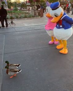 Disney Ducks 🦆 Ducks of a feather flock together! Funny Disney Jokes, Disney Memes, Disney Quotes, Disney Cartoons, Disney Duck, Cute Disney, 9gag Funny, Funny Memes, Funny Duck