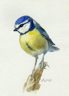Bird painting, watercolor bird, Blue Tit Bird Original watercolor painting, Cyanistes caeruleus, Chickadee family on Etsy, $79.00