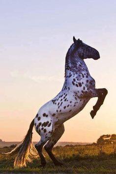 Beautiful horse, beautiful photo!