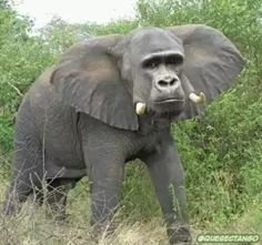 28 Interesting Animal Species Created Using Photoshop (Photo Gallery) Safari Animals, Animals And Pets, Funny Animals, Cute Animals, Trucage Photo, Photoshopped Animals, Animal Pictures, Funny Pictures, Animal Mashups