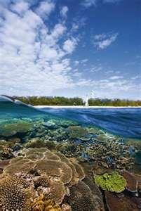 Great Barrier Reef @ Lady Elliot Island