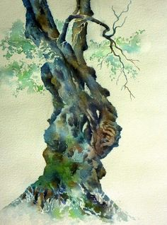 Watercolor old olive tree