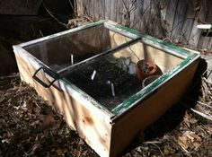 Cold frame DIY to start seeds using a window