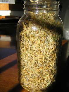 Sprouted whole grains for chicken food
