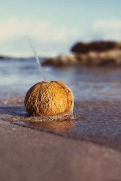Hawaii // Oahu North Shore (one of my favorite childhood memories is drinking straight from the coconut with my friends, dad made the straw holes for us) Maui Vacation, Dream Vacations, North Shore Oahu, Tropical, Coconut Grove, Aloha Hawaii, Big Island, Island Girl, Paradise Island