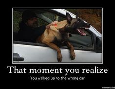 This happens to us. Makes it interesting when we have 2 of our Mals out for a ride. Love it!!!