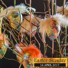 Schuman Feathers - Quality Wholesale Feathers to buy in the USA Pheasant Feathers, Ostrich Feathers, Peacock Feathers, Easter Eggs, Sunday, Range, Decoration, Flowers, Crafts