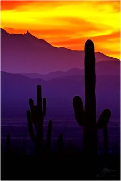 Saguaro National Park, AZ-- it really does look like this!!