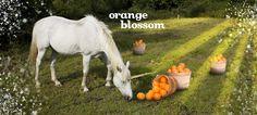 Orange Blossom by DavidsTea