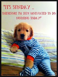 Brilliant Lifehacks For Your Tiny Closet Golden retriever puppy in footy pajamas! Does it get any cuter than this?Golden retriever puppy in footy pajamas! Does it get any cuter than this? Puppies In Pajamas, Cute Puppies, Cute Dogs, Dogs And Puppies, Doggies, Golden Retrievers, Dogs Golden Retriever, Animals And Pets, Baby Animals