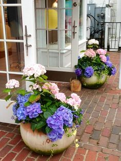 These are stunning hydrangea containers in the  downtown area of Edgartown on Martha's Vineyard, MA.