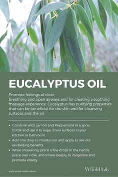Benefits of eucalyptus essential oil.