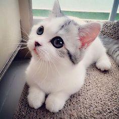 Imagem de cat, cute, and animal Veja este link >> http://www.universodegatos.com/gatinhos/ ~  Os gatinhos são adoráveis e difíceis de resistir, mas se não pode dar muita atenção o ideal é um gato adulto. Se procura um companheiro felino, irá encontrar várias opções.