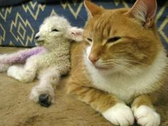 The lamb will just have to grow up thinking it's a cat