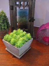 """New Faux Succulent """"Fairy Garden"""" Sedum Rubrotinctum """"Jelly Bean"""" Cactus In Pot"""