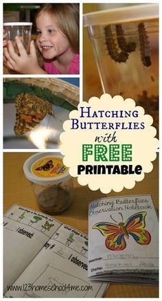 FREE butterfly observation notebook and great pictures as caterpillars turn into butterflies. Great for preschool, kindergarten, homeschool kids or for summer activities for kids.
