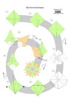 Bird-base star diagram
