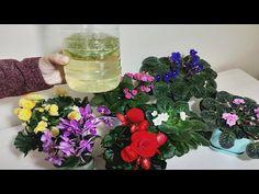 Glass Vase, Garden, Flowers, Plants, Home Decor, Planters, Embroidery, Garten, Decoration Home