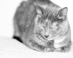 Black and White Gray Cat Kitty White  Minimal Minimalist Photography Feline Abstract Photography, 8 x 10 Fine Art Print
