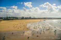 Plage Tagharte, Essaouira beach. Morocco