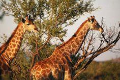 auas-safari-lodge Namibia Beautiful Namibia