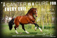 Canter| The Carousel Horse | carouselhorsetack.com