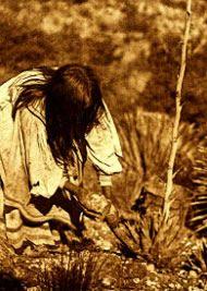Apache woman cutting mescal