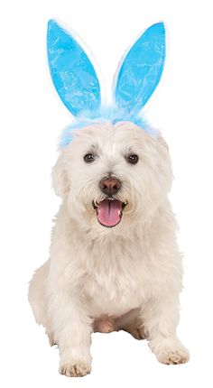 Rubies Costume Company Crinkle Blue Bunny Ears Pet Headband * Want additional info? Click on the image. (This is an affiliate link and I receive a commission for the sales)