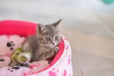 12 Signs that your Cat may be ill  #Cats #Kittens #PetBlog #PetTips #VetMedic #Blog #Pets