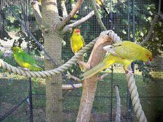 my kakariki Parrot, Birds, Pets, Nature, Animals, Beautiful, Parrots, Parrot Bird, Naturaleza