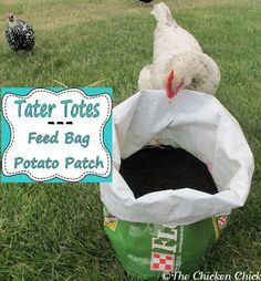 Tater Totes: Feed Bag Potato Patch.  ~ she says to use the plastic bags, but I wonder if the paper ones we get our feed in would hold up for a season? Sounds like a good experiment for this year!