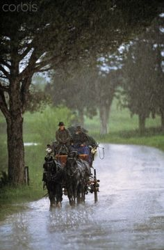 The Andreas Nemitz carriage driving along he little country street near Castelnuovo Tancredi estate, below the thunderstorm