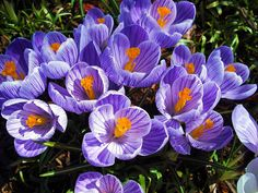 Flower Photograph - Spring Crocus by Jennifer Eddiba