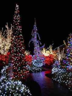 Every winter, the entire little town of Blyn, WA is decorated in millions of lights!