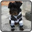 Free Dog Clothes Patterns  This one for you, WENDY!!!!!