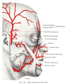 nerve to mylohyoid - Google Search