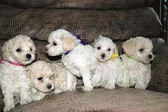 dicas pet shop: Nomes Para Cães Femea com a letra A