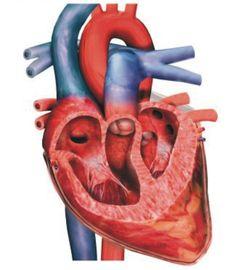 Klikdokter.com situs Kesehatan Terpercaya di Indonesia. Informasi kesehatan, kecantikan, Mengulas penyakit…