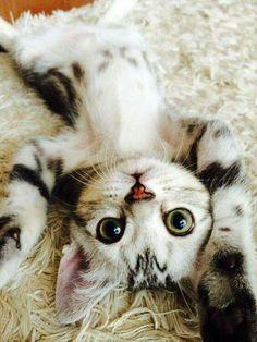 """You're upside down again, Human Mom!"""